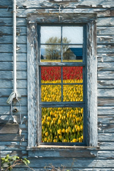 Old boat house with tulip fields out the window